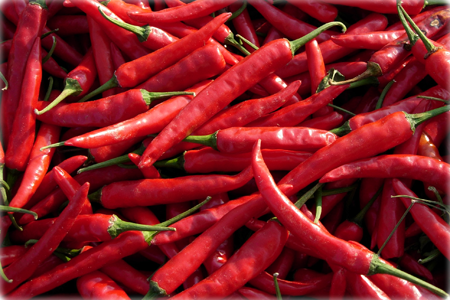 Chillies on the web